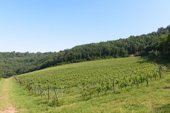 Vineyards for Sale in Tuscany, Italy