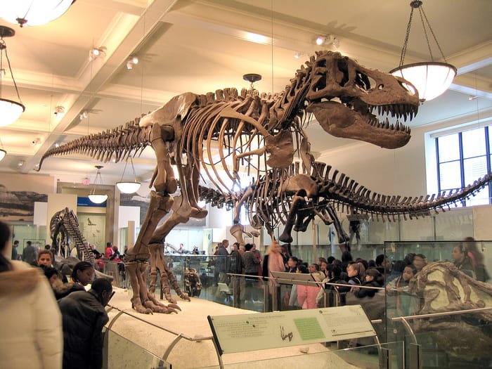 Best Places to Visit in New York City - American Museum of Natural History