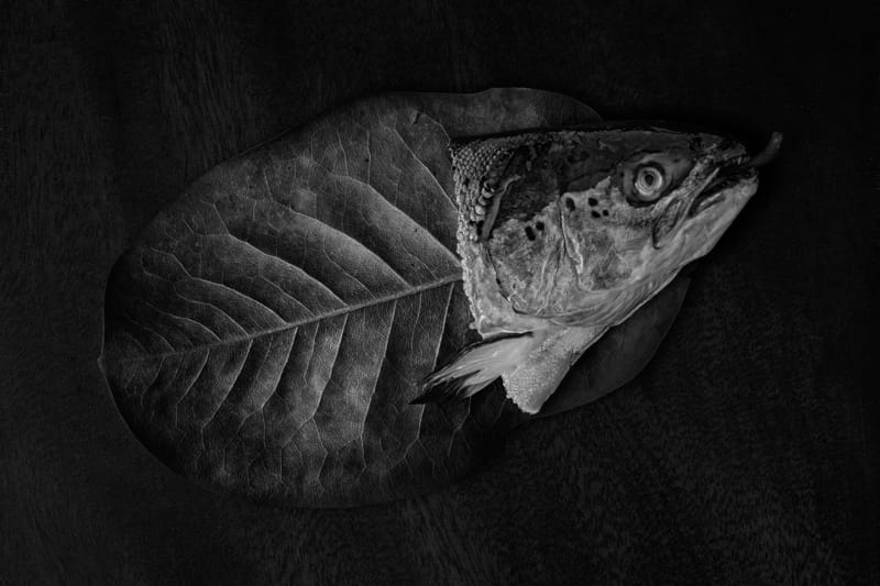 Fish Bones - Photo by Jose Lai�o